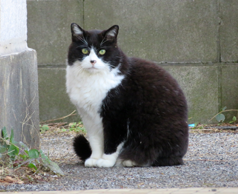 家政猫は見た!!
