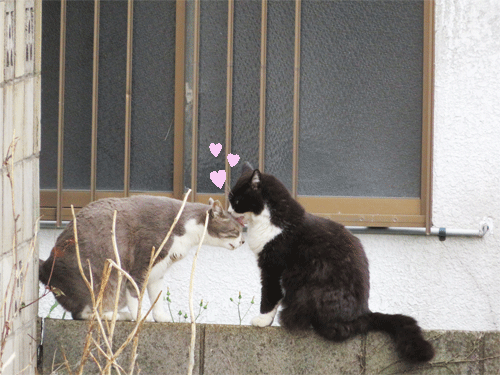 仲良し猫夫婦と貫禄の理由