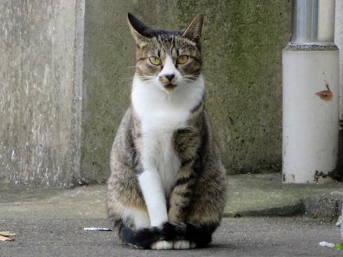おすまし猫
