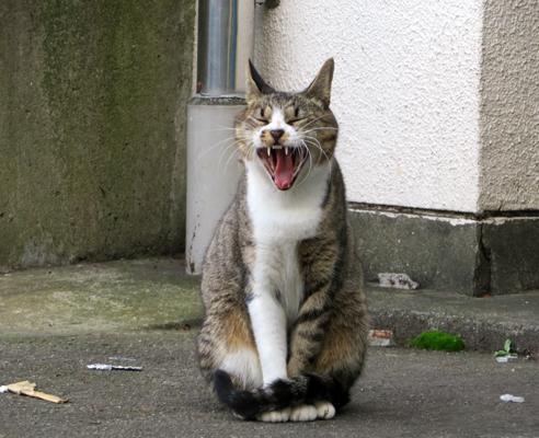 猫探し散歩①